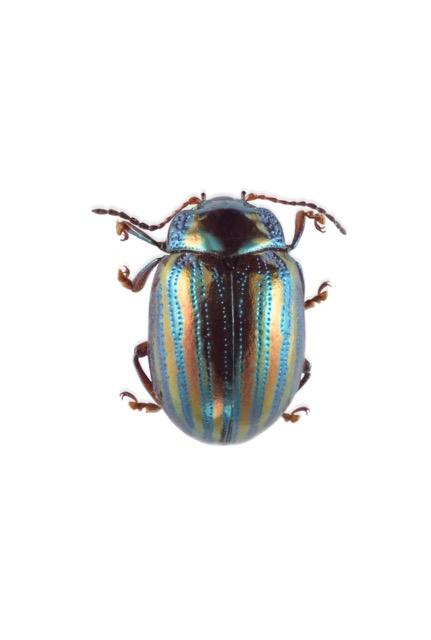 Insectes_Museum0268-Modifier